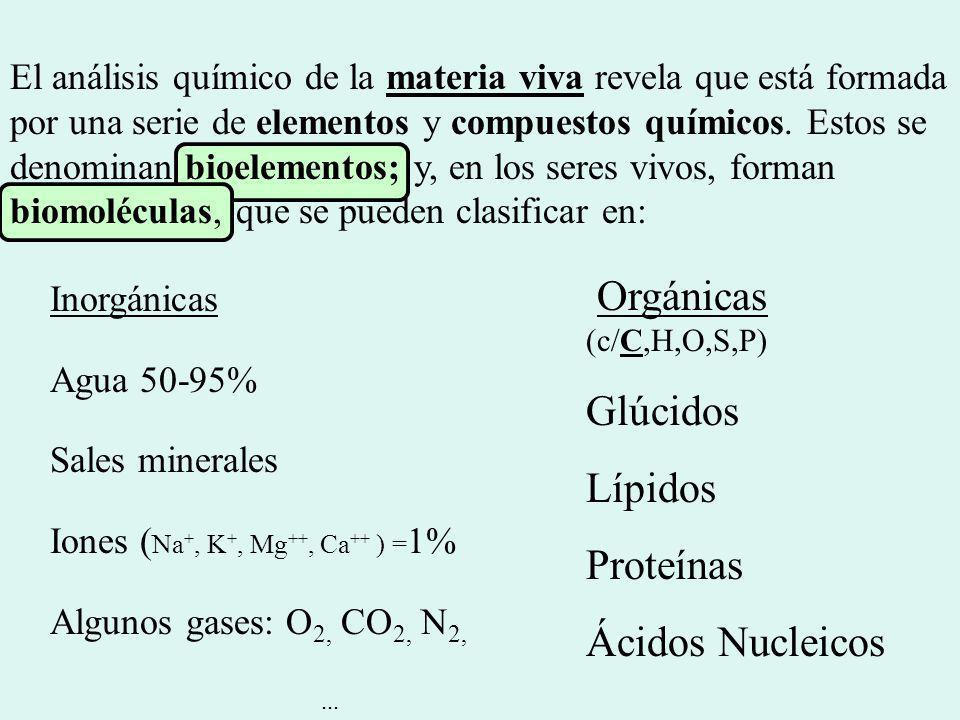 Inorgánicas Agua 50-95% Sales minerales Iones ( Na +, K +, Mg ++, Ca ++ ) = 1% Algunos gases: O 2, CO 2, N 2,... Orgánicas (c/C,H,O,S,P) Glúcidos Lípi
