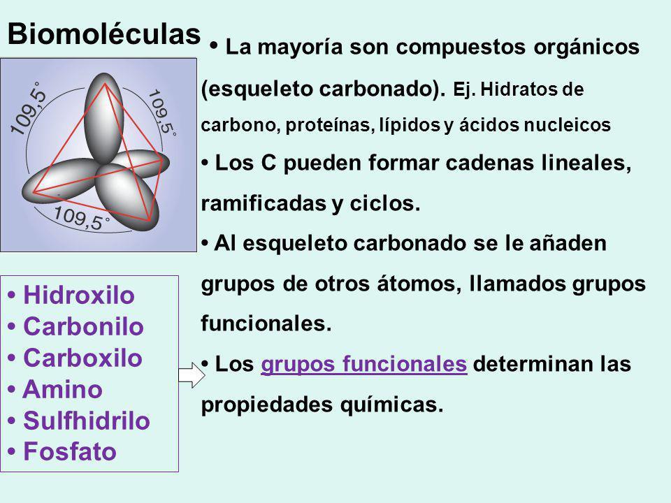 La mayoría son compuestos orgánicos (esqueleto carbonado). Ej. Hidratos de carbono, proteínas, lípidos y ácidos nucleicos Los C pueden formar cadenas