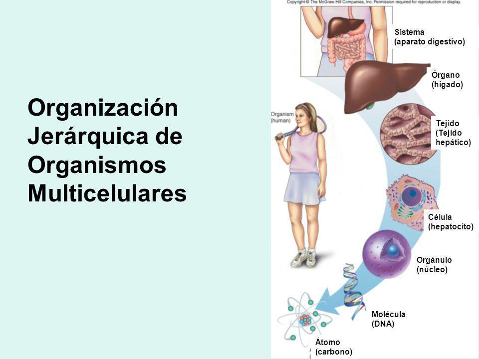 Biomoléculas inorgánicas: *El agua *Sólidos minerales: fosfato de calcio insolubles (formación de tejidos duros huesos y dientes) *Iones (disueltos en líquidos corporales y protoplasma celular) esenciales para funciones vitales