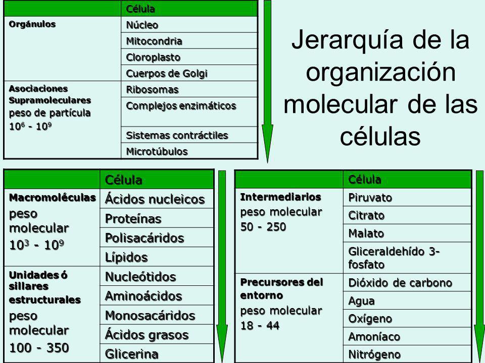 Jerarquía en la Estructura Celular