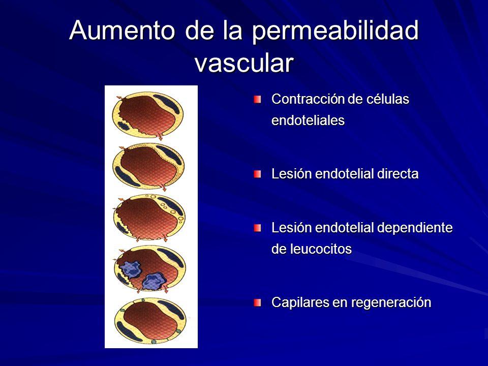 Aumento de la permeabilidad vascular Contracción de células endoteliales Lesión endotelial directa Lesión endotelial dependiente de leucocitos Capilar