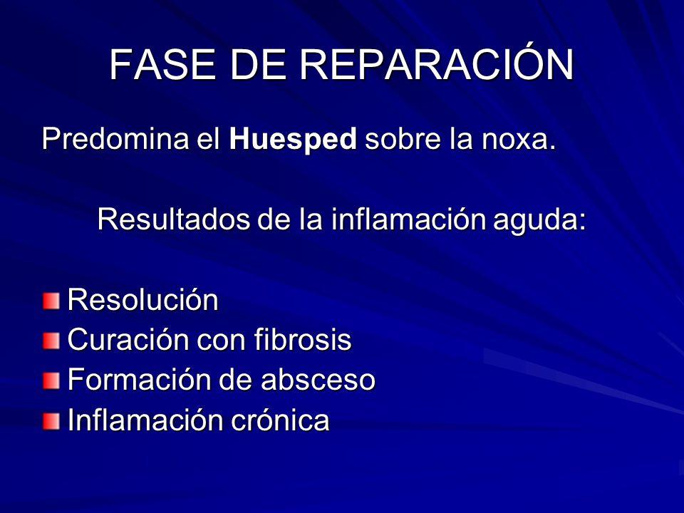 FASE DE REPARACIÓN Predomina el Huesped sobre la noxa. Resultados de la inflamación aguda: Resolución Curación con fibrosis Formación de absceso Infla