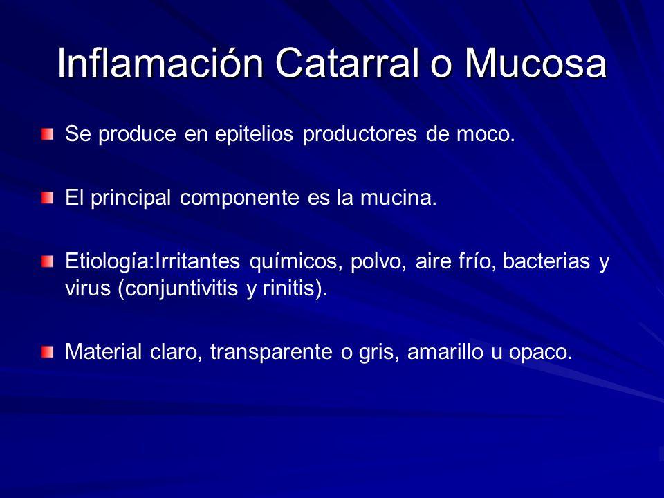 Inflamación Catarral o Mucosa Se produce en epitelios productores de moco. El principal componente es la mucina. Etiología:Irritantes químicos, polvo,