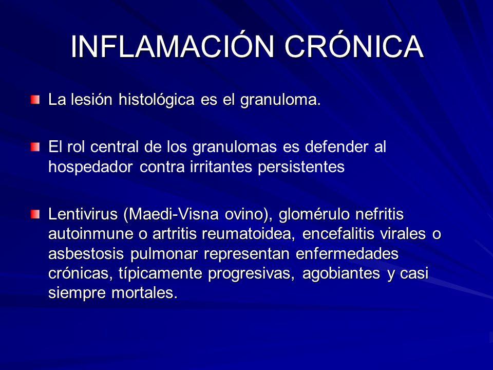 INFLAMACIÓN CRÓNICA La lesión histológica es el granuloma. El rol central de los granulomas es defender al hospedador contra irritantes persistentes L