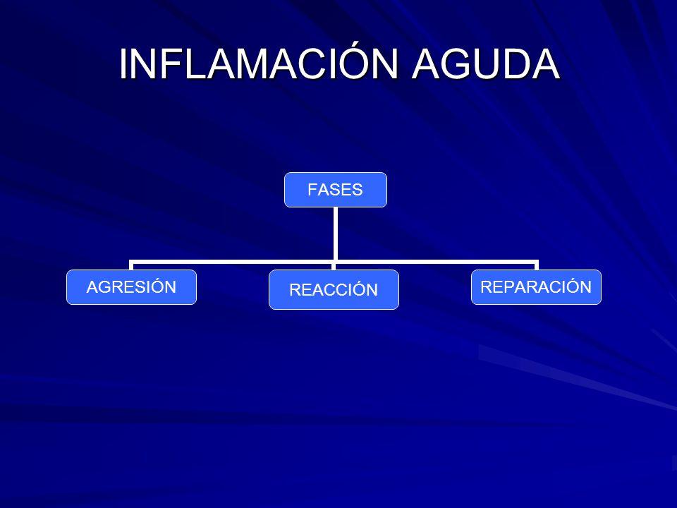 Inflamación Serosa El constituyente principal es la linfa o el plasma.