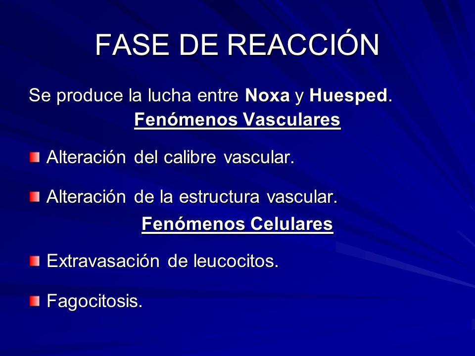 FASE DE REACCIÓN Se produce la lucha entre Noxa y Huesped. Fenómenos Vasculares Alteración del calibre vascular. Alteración de la estructura vascular.