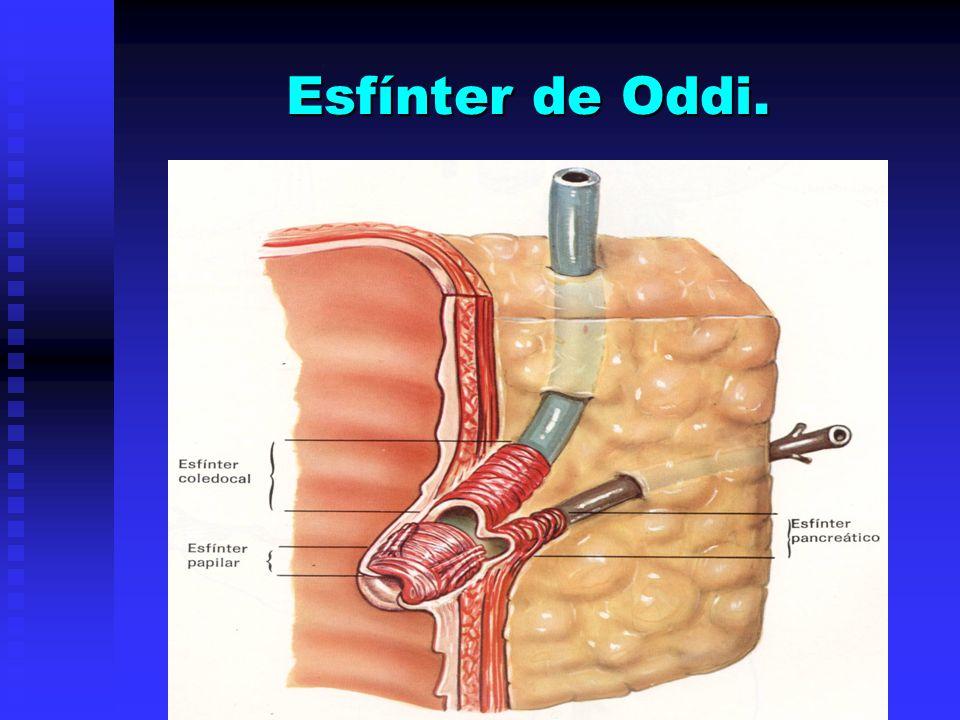 Esfínter de Oddi.