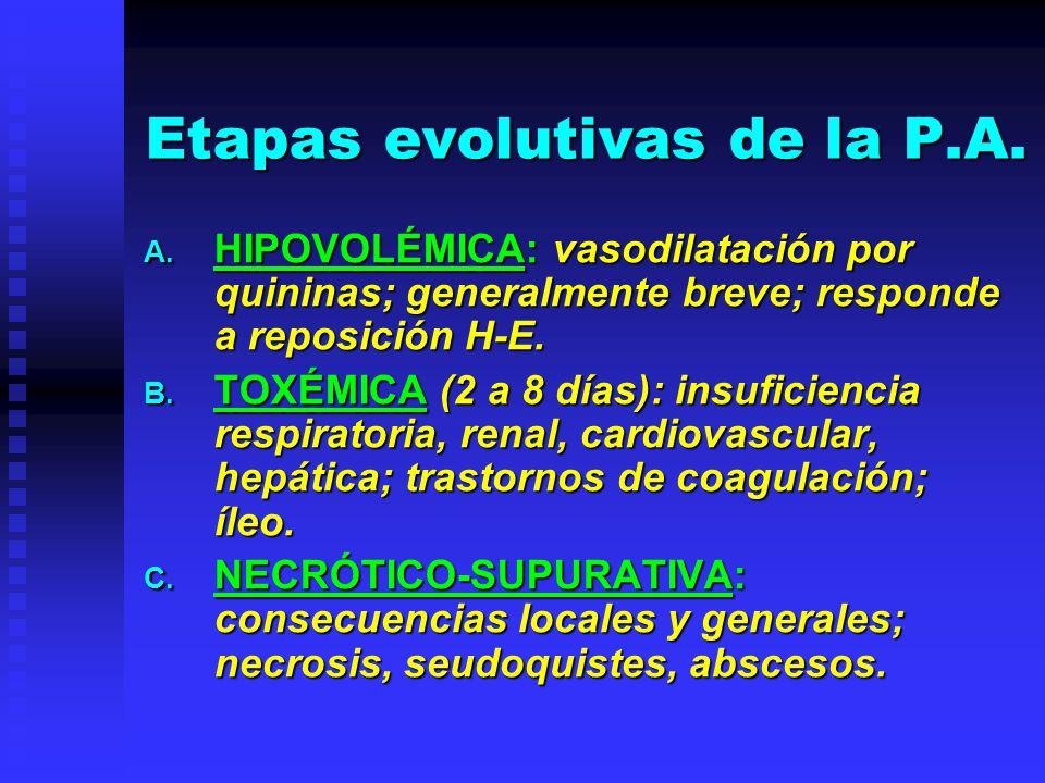 Etapas evolutivas de la P.A. A. HIPOVOLÉMICA: vasodilatación por quininas; generalmente breve; responde a reposición H-E. B. TOXÉMICA (2 a 8 días): in