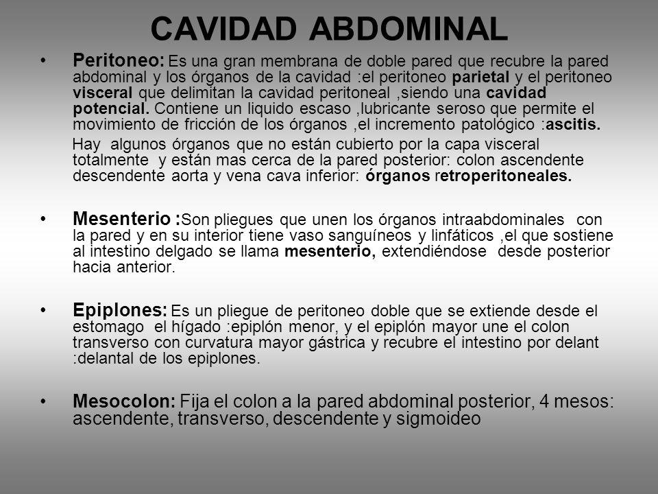 CAVIDAD ABDOMINAL Peritoneo: Es una gran membrana de doble pared que recubre la pared abdominal y los órganos de la cavidad :el peritoneo parietal y el peritoneo visceral que delimitan la cavidad peritoneal,siendo una cavidad potencial.