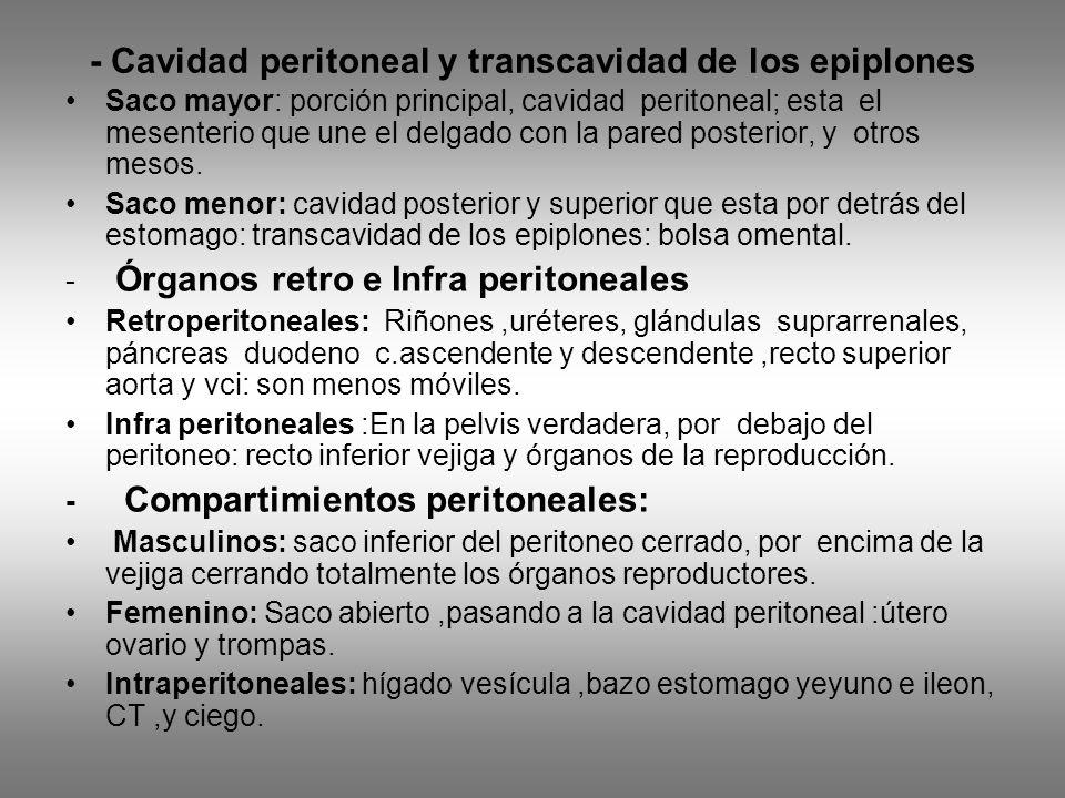 - Cavidad peritoneal y transcavidad de los epiplones Saco mayor: porción principal, cavidad peritoneal; esta el mesenterio que une el delgado con la p