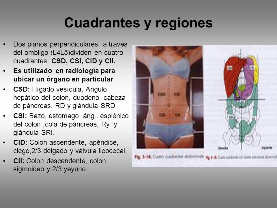 Cuadrantes y regiones Dos planos perpendiculares a través del ombligo (L4L5)dividen en cuatro cuadrantes: CSD, CSI, CID y CII. Es utilizado en radiolo