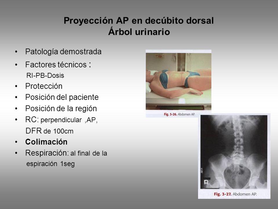 Proyección AP en decúbito dorsal Árbol urinario Patología demostrada Factores técnicos : RI-PB-Dosis Protección Posición del paciente Posición de la región RC: perpendicular,AP, DFR de 100cm Colimación Respiración: al final de la espiración 1seg
