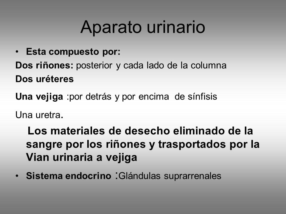 Aparato urinario Esta compuesto por: Dos riñones: posterior y cada lado de la columna Dos uréteres Una vejiga :por detrás y por encima de sínfisis Una uretra.