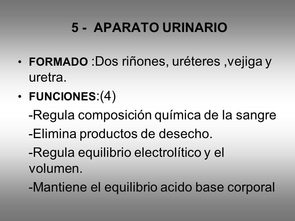5 - APARATO URINARIO FORMADO :Dos riñones, uréteres,vejiga y uretra. FUNCIONES :(4) -Regula composición química de la sangre -Elimina productos de des