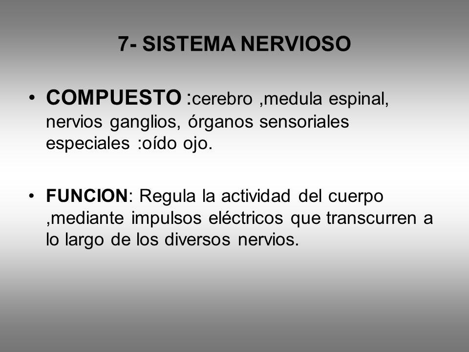 7- SISTEMA NERVIOSO COMPUESTO : cerebro,medula espinal, nervios ganglios, órganos sensoriales especiales :oído ojo. FUNCION: Regula la actividad del c