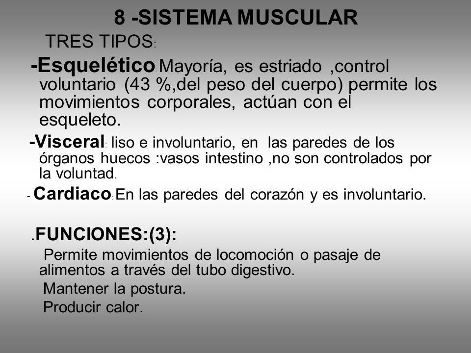 8 -SISTEMA MUSCULAR TRES TIPOS : -Esquelético : Mayoría, es estriado,control voluntario (43 %,del peso del cuerpo) permite los movimientos corporales,