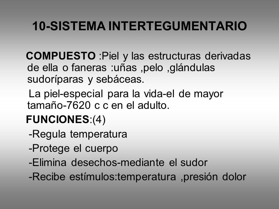 10-SISTEMA INTERTEGUMENTARIO COMPUESTO :Piel y las estructuras derivadas de ella o faneras :uñas,pelo,glándulas sudoríparas y sebáceas. La piel-especi