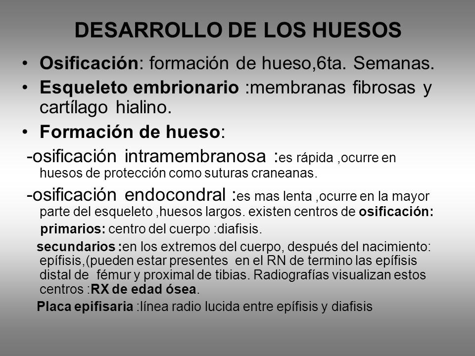 DESARROLLO DE LOS HUESOS Osificación: formación de hueso,6ta. Semanas. Esqueleto embrionario :membranas fibrosas y cartílago hialino. Formación de hue