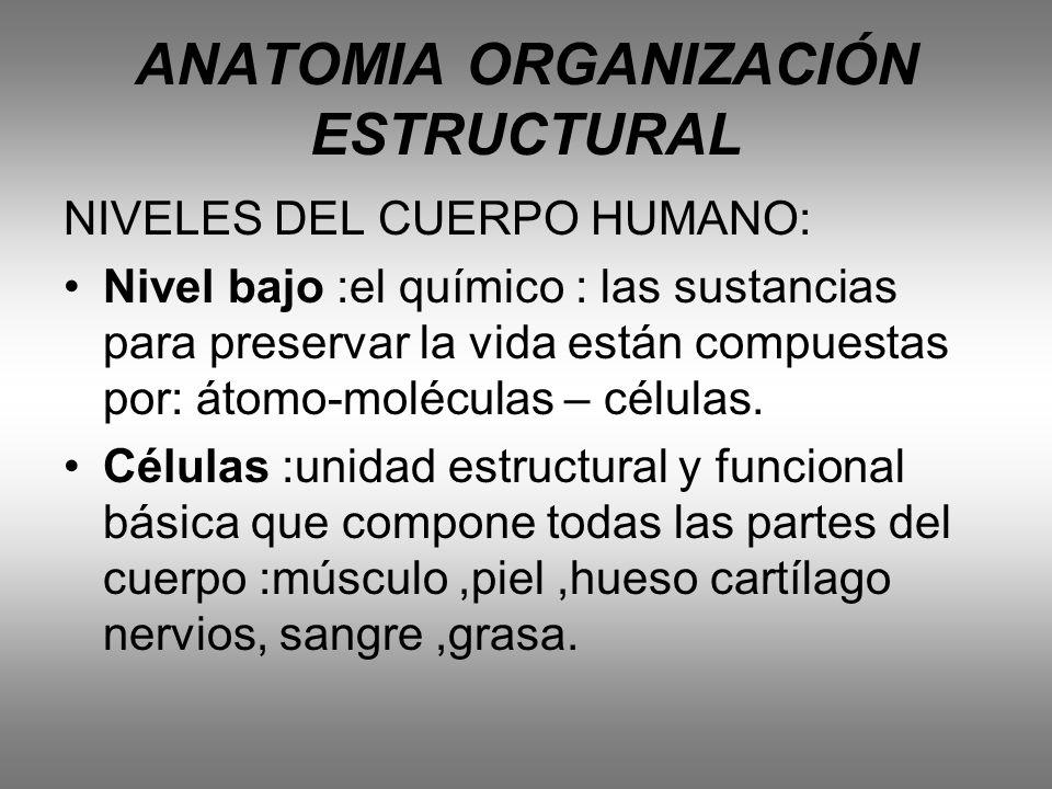 ANATOMIA ORGANIZACIÓN ESTRUCTURAL NIVELES DEL CUERPO HUMANO: Nivel bajo :el químico : las sustancias para preservar la vida están compuestas por: átom
