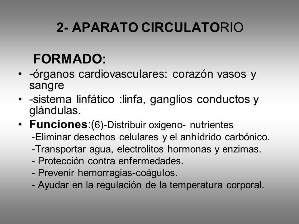 2- APARATO CIRCULATORIO FORMADO: -órganos cardiovasculares: corazón vasos y sangre -sistema linfático :linfa, ganglios conductos y glándulas. Funcione