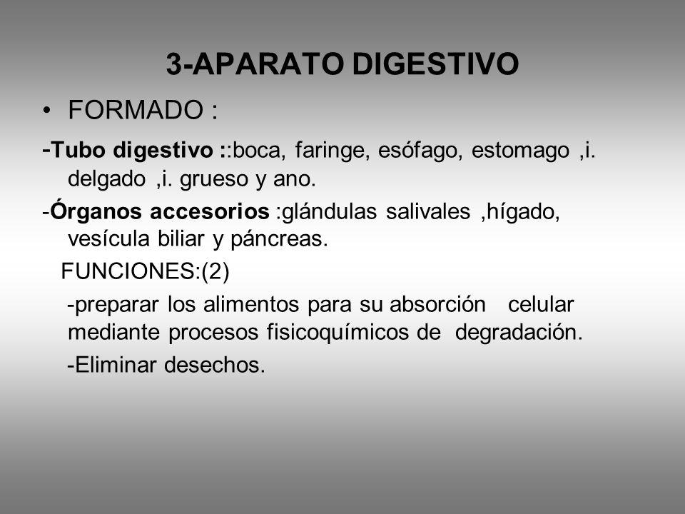 3-APARATO DIGESTIVO FORMADO : - Tubo digestivo ::boca, faringe, esófago, estomago,i. delgado,i. grueso y ano. -Órganos accesorios :glándulas salivales