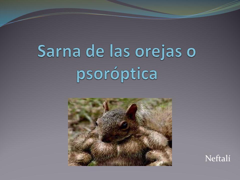 Definicion Se incluyen aquellos procesos cutáneos originados por ácaros que se manifiestan con un intenso prurito y cuya forma de transmisión es la directa, de animal a animal.