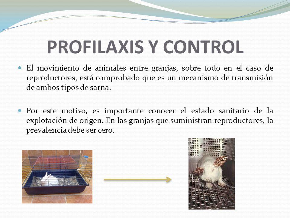 PROFILAXIS Y CONTROL El movimiento de animales entre granjas, sobre todo en el caso de reproductores, está comprobado que es un mecanismo de transmisi
