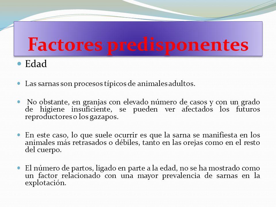 Factores predisponentes Edad Las sarnas son procesos típicos de animales adultos. No obstante, en granjas con elevado número de casos y con un grado d