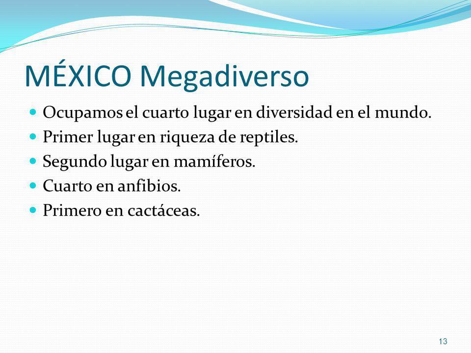 MÉXICO Megadiverso Ocupamos el cuarto lugar en diversidad en el mundo. Primer lugar en riqueza de reptiles. Segundo lugar en mamíferos. Cuarto en anfi