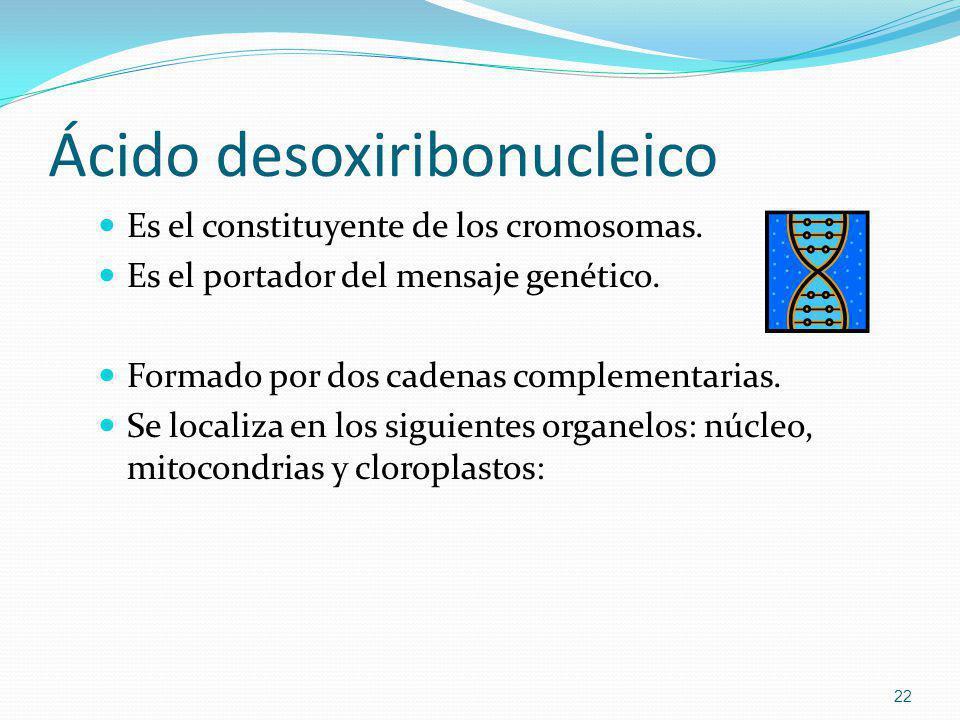 Ácido desoxiribonucleico Es el constituyente de los cromosomas. Es el portador del mensaje genético. Formado por dos cadenas complementarias. Se local