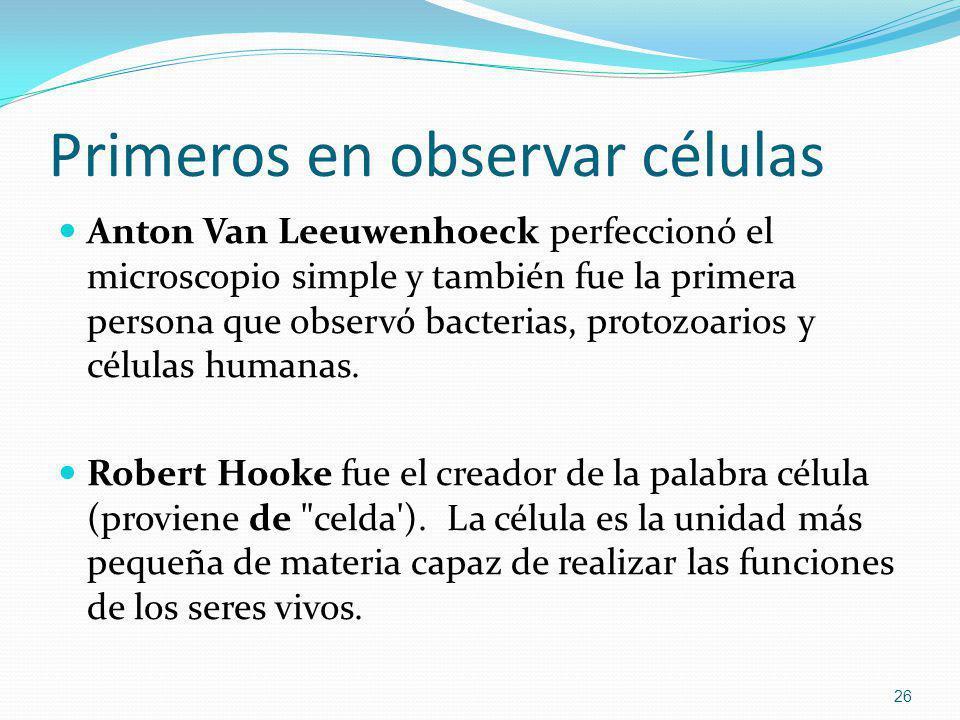 Primeros en observar células Anton Van Leeuwenhoeck perfeccionó el microscopio simple y también fue la primera persona que observó bacterias, protozoa