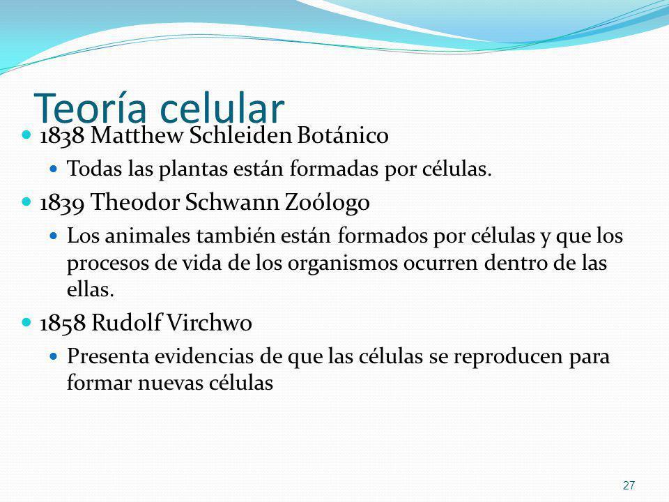 Teoría celular 1838 Matthew Schleiden Botánico Todas las plantas están formadas por células. 1839 Theodor Schwann Zoólogo Los animales también están f