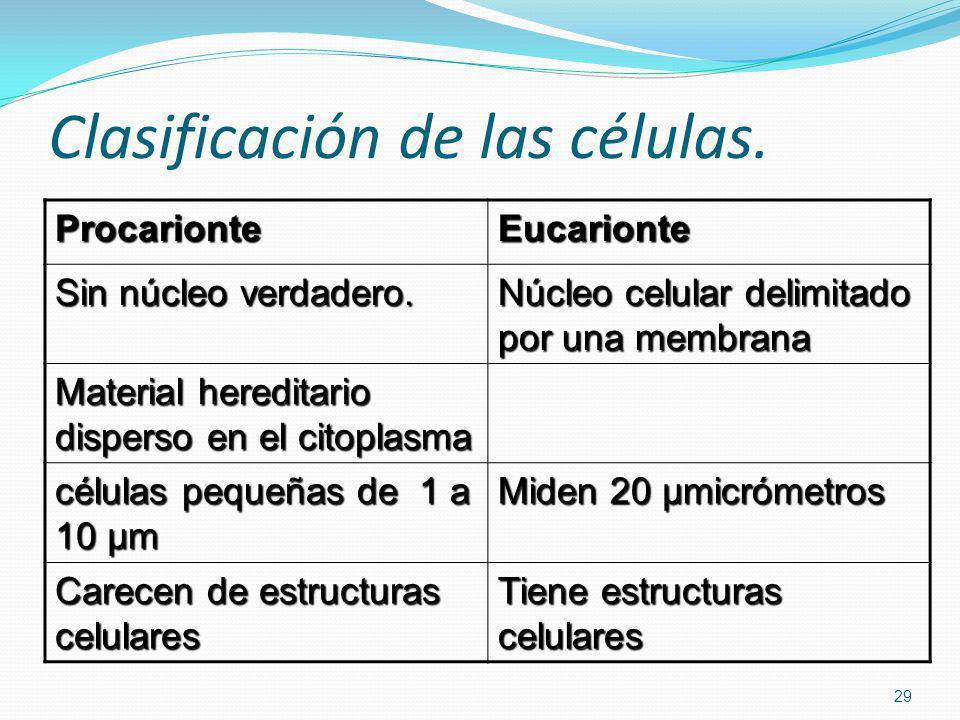 Clasificación de las células. ProcarionteEucarionte Sin núcleo verdadero. Núcleo celular delimitado por una membrana Material hereditario disperso en