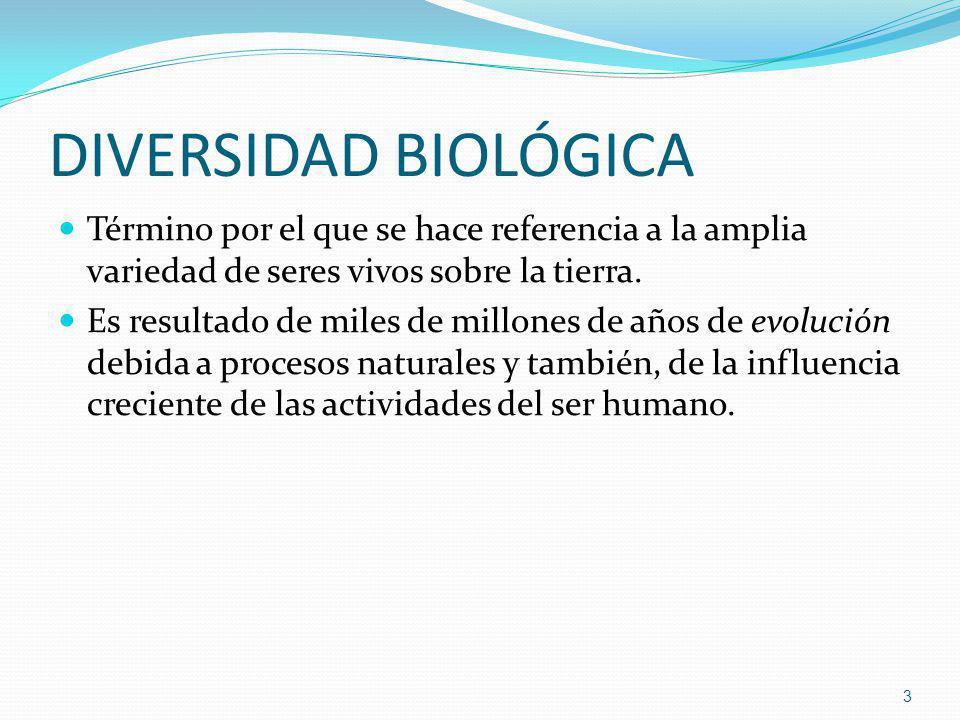 DIVERSIDAD BIOLÓGICA Término por el que se hace referencia a la amplia variedad de seres vivos sobre la tierra. Es resultado de miles de millones de a
