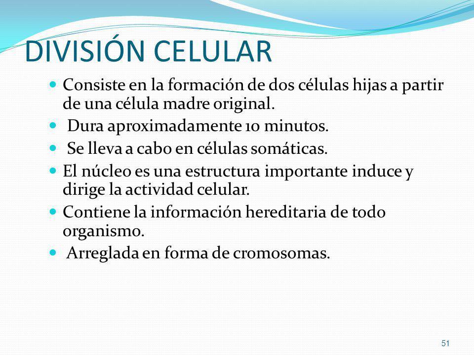 DIVISIÓN CELULAR Consiste en la formación de dos células hijas a partir de una célula madre original. Dura aproximadamente 10 minutos. Se lleva a cabo