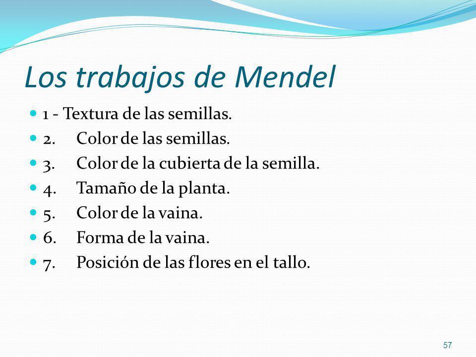 Los trabajos de Mendel 1 - Textura de las semillas. 2.Color de las semillas. 3.Color de la cubierta de la semilla. 4.Tamaño de la planta. 5.Color de l