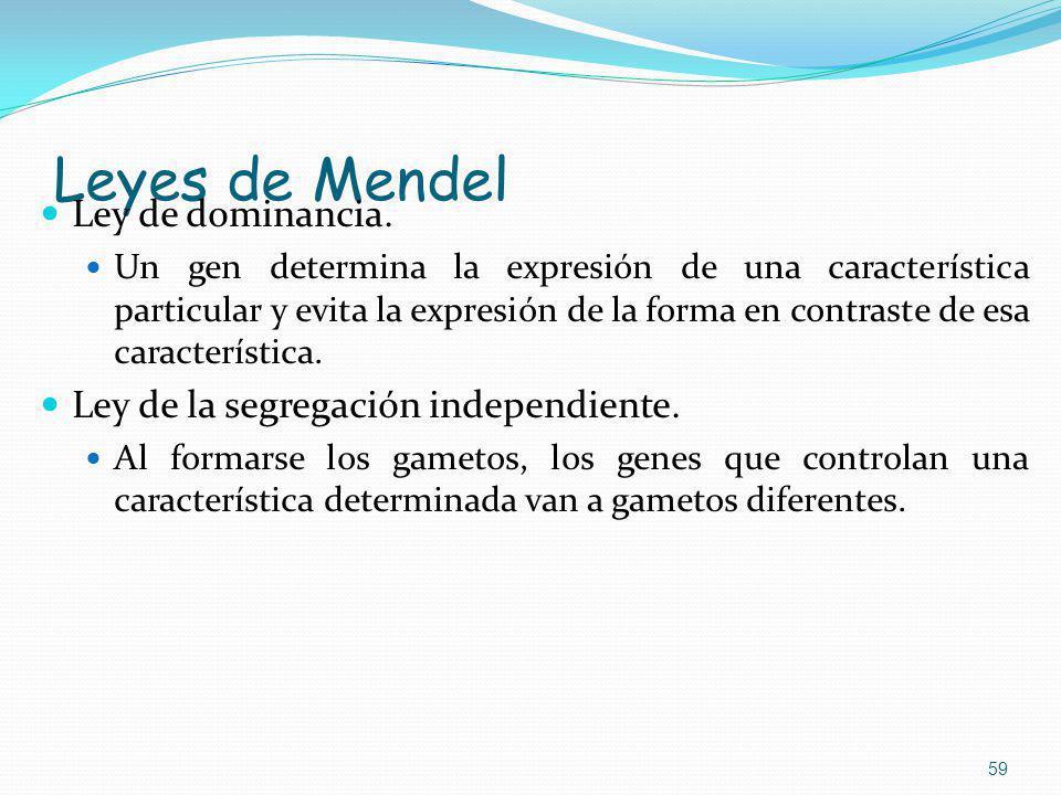 Leyes de Mendel Ley de dominancia. Un gen determina la expresión de una característica particular y evita la expresión de la forma en contraste de esa