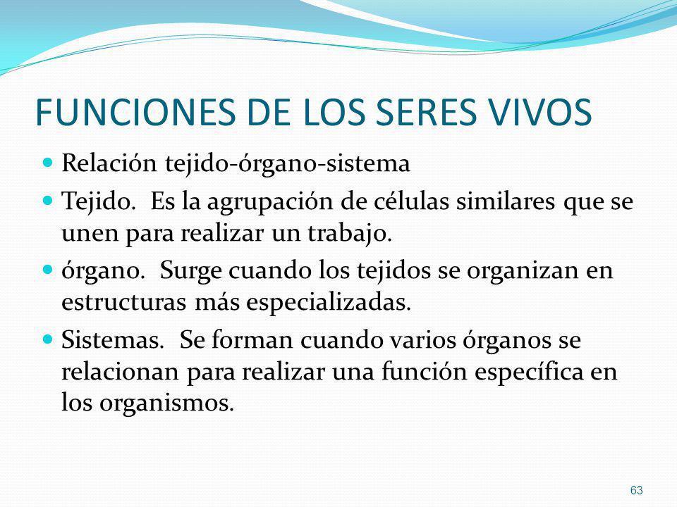 FUNCIONES DE LOS SERES VIVOS Relación tejido-órgano-sistema Tejido. Es la agrupación de células similares que se unen para realizar un trabajo. órgano