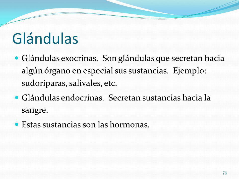 Glándulas Glándulas exocrinas. Son glándulas que secretan hacia algún órgano en especial sus sustancias. Ejemplo: sudoríparas, salivales, etc. Glándul