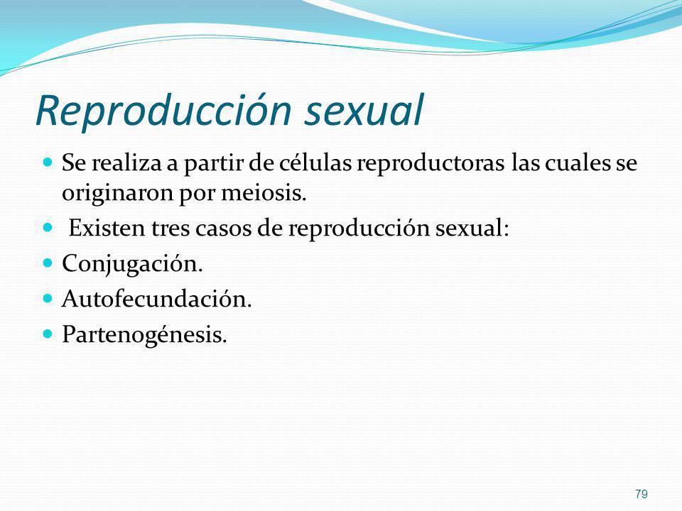 Reproducción sexual Se realiza a partir de células reproductoras las cuales se originaron por meiosis. Existen tres casos de reproducción sexual: Conj