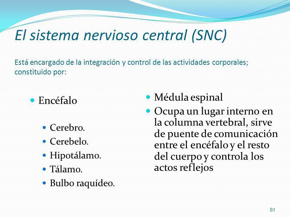 El sistema nervioso central (SNC) Está encargado de la integración y control de las actividades corporales; constituido por: Encéfalo Cerebro. Cerebel