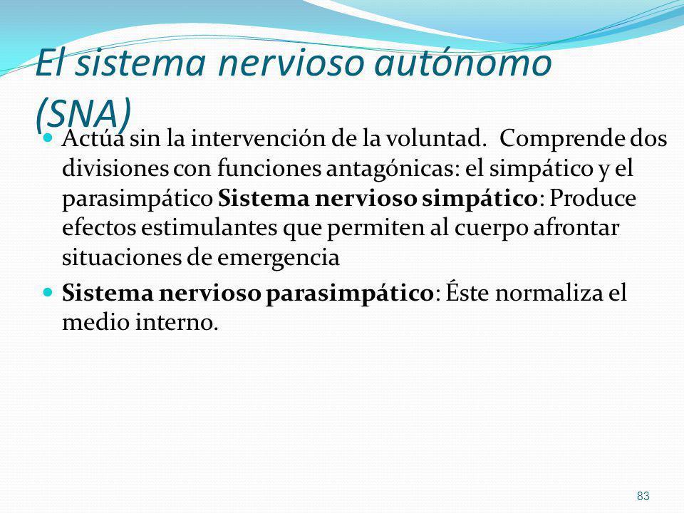 El sistema nervioso autónomo (SNA) Actúa sin la intervención de la voluntad. Comprende dos divisiones con funciones antagónicas: el simpático y el par