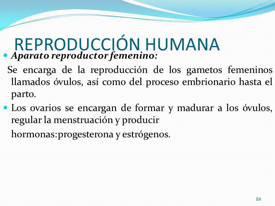 REPRODUCCIÓN HUMANA Aparato reproductor femenino: Se encarga de la reproducción de los gametos femeninos llamados óvulos, así como del proceso embrion
