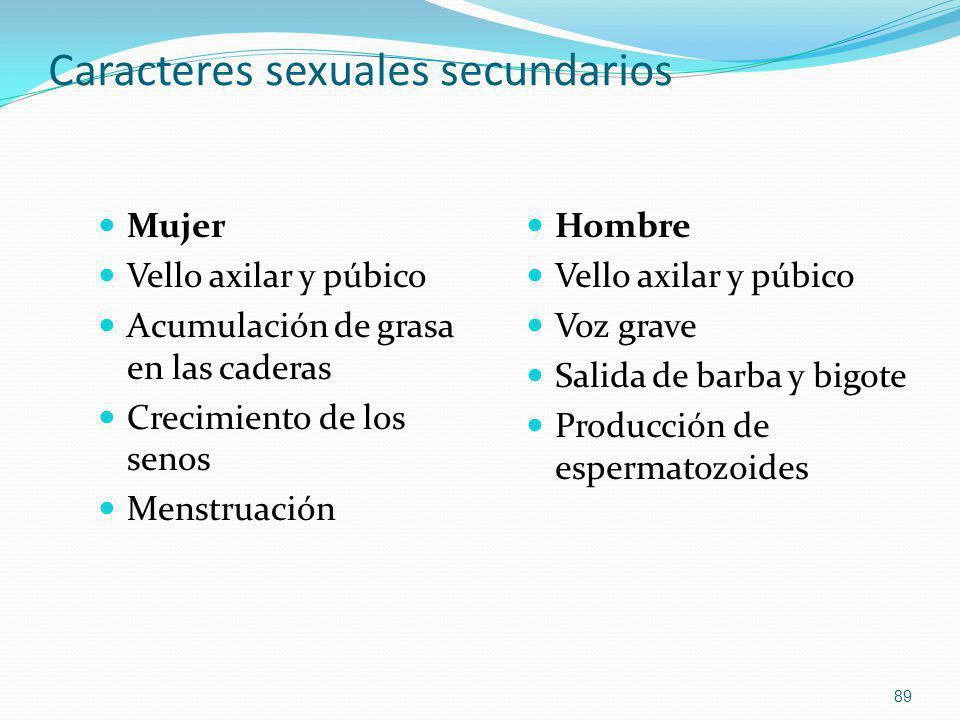 Caracteres sexuales secundarios Mujer Vello axilar y púbico Acumulación de grasa en las caderas Crecimiento de los senos Menstruación Hombre Vello axi