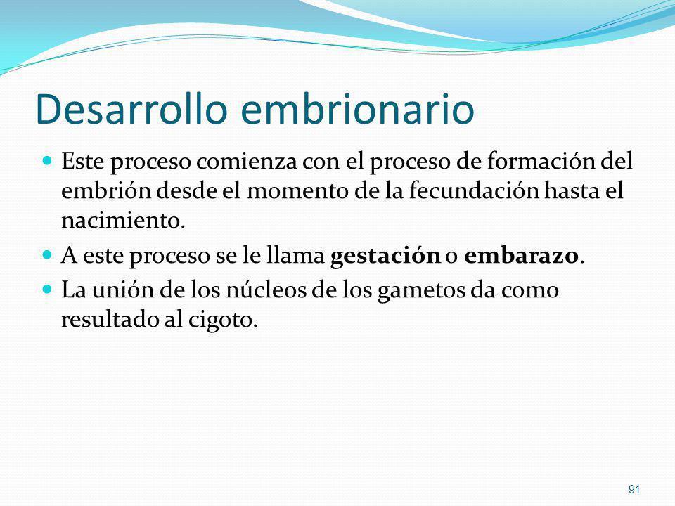 Desarrollo embrionario Este proceso comienza con el proceso de formación del embrión desde el momento de la fecundación hasta el nacimiento. A este pr
