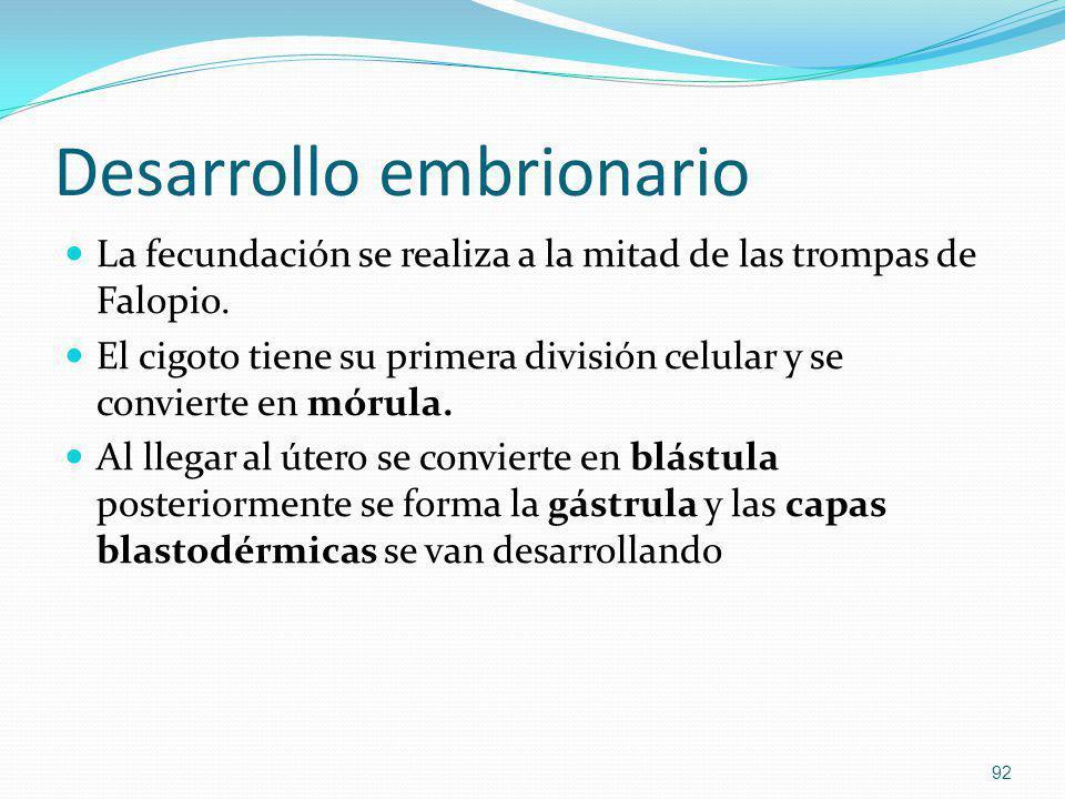 Desarrollo embrionario La fecundación se realiza a la mitad de las trompas de Falopio. El cigoto tiene su primera división celular y se convierte en m