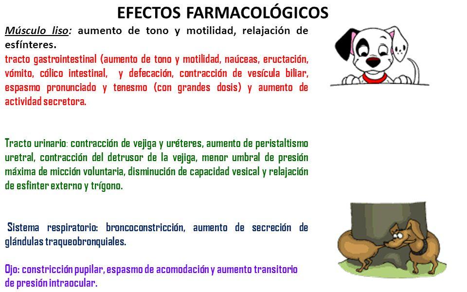 EFECTOS FARMACOLÓGICOS Músculo liso: aumento de tono y motilidad, relajación de esfínteres. tracto gastrointestinal (aumento de tono y motilidad, naúc