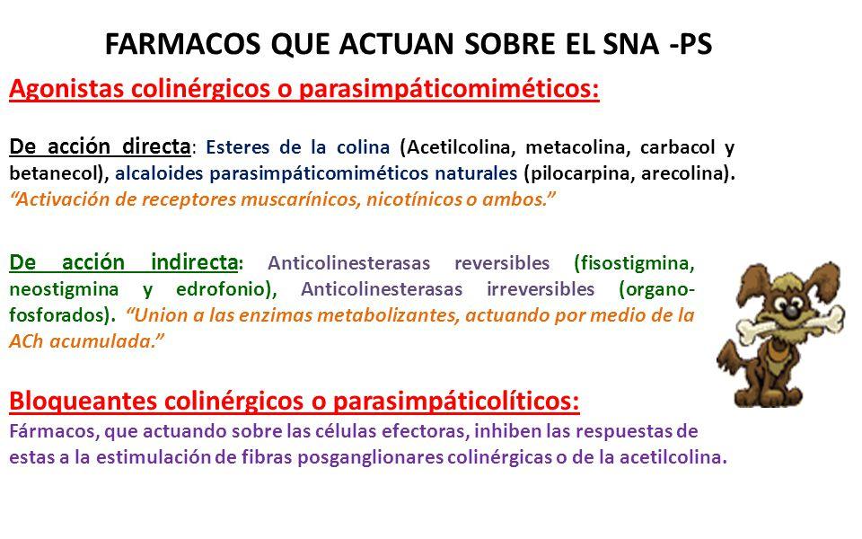 FARMACOS QUE ACTUAN SOBRE EL SNA -PS Agonistas colinérgicos o parasimpáticomiméticos: De acción directa : Esteres de la colina (Acetilcolina, metacoli