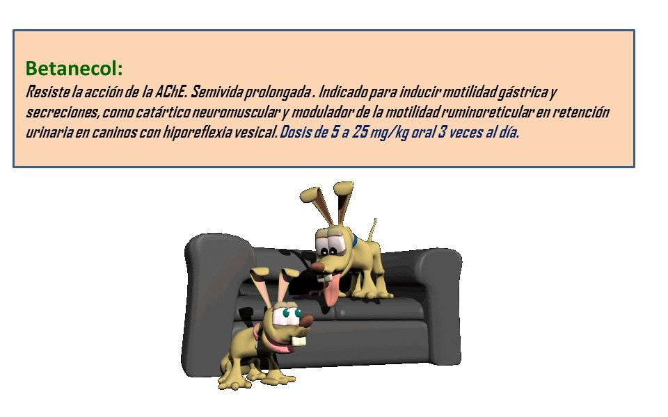Betanecol: Resiste la acción de la AChE. Semivida prolongada. Indicado para inducir motilidad gástrica y secreciones, como catártico neuromuscular y m