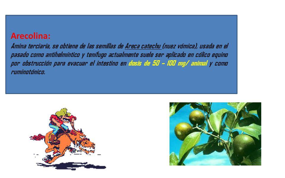 Arecolina: Amina terciaria, se obtiene de las semillas de Areca catechu (nuez vómica), usada en el pasado como antihelmíntico y tenífugo actualmente s